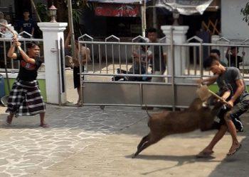 Salah satu jamaah tarung dengan babi hutan. Jamaah tersebut mengalami luka cukup serius/Dok