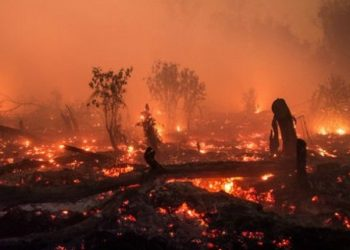 Kebakaran hutan/Net
